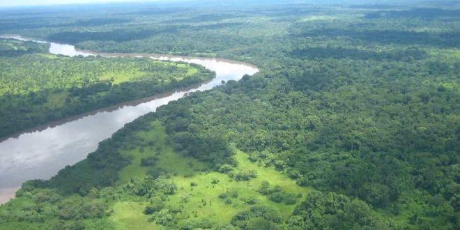 Regenwald Afrika Kongo