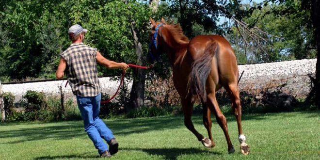 Pferde – Erfahrung hilft beim Umgang mit dem Sommerekzem